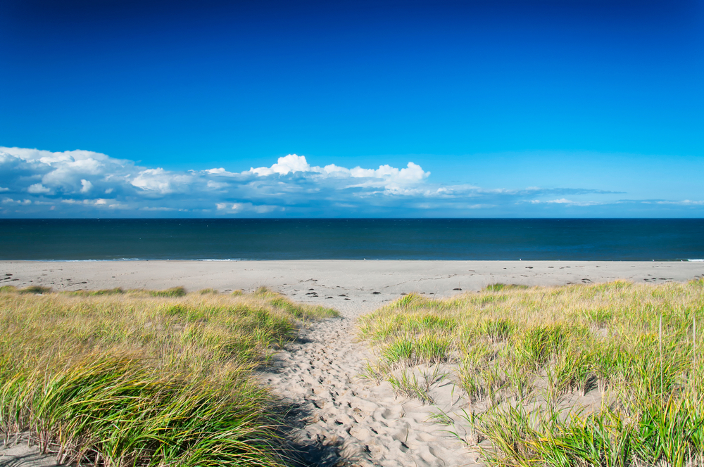 The grass covered sand dunes leading to race point beach on the cape cod national seashore in massachusetts. on a sunny blue sky day.