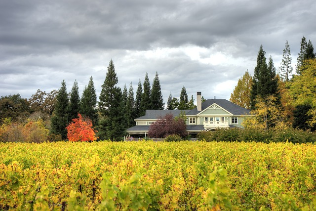 A Napa Valley winery in the distance behind rows of grapevines