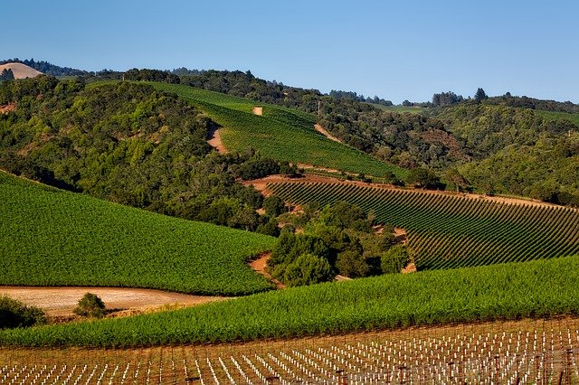 Napa Valley vineyards and hills stretch into the distance