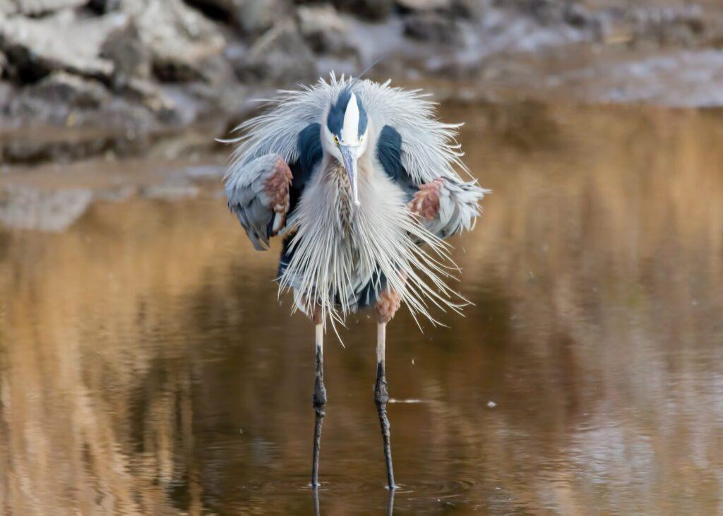 Bird at Blackwater