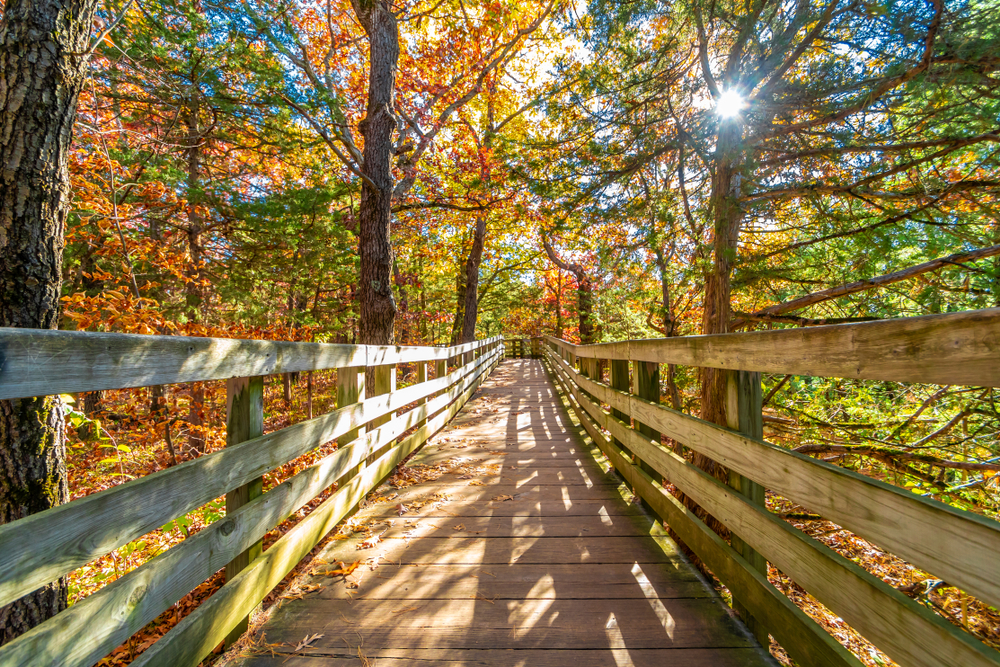 A wooden bridge leads a pathway through tall trees with orange, yellow and green leaves. The sun peaks through the treetops
