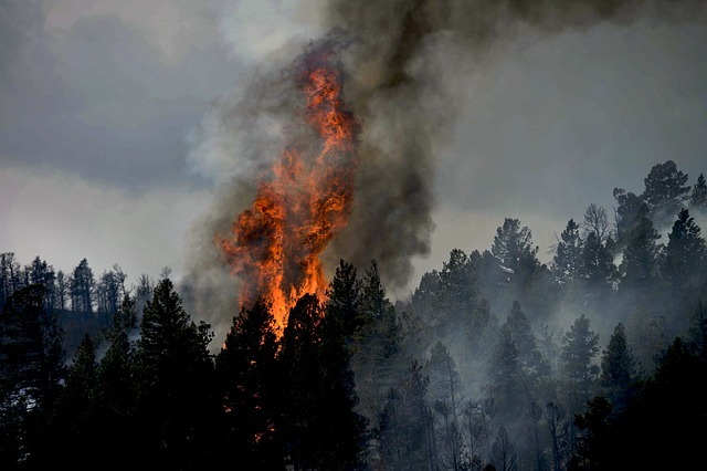 A forest fire burns trees in Colorado