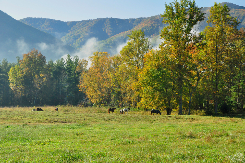 Horses graze on the grass beside tall green trees. Fog and mountaintops peak out above the trees.