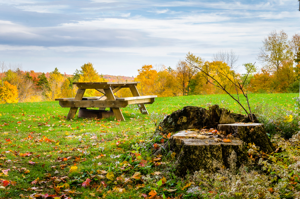 A picnic table in a grassy clearing covered with fallen leaves on a cloudy autumn day. A tree stump sits in the foreground.