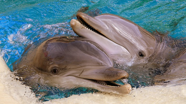 dolphins posing together