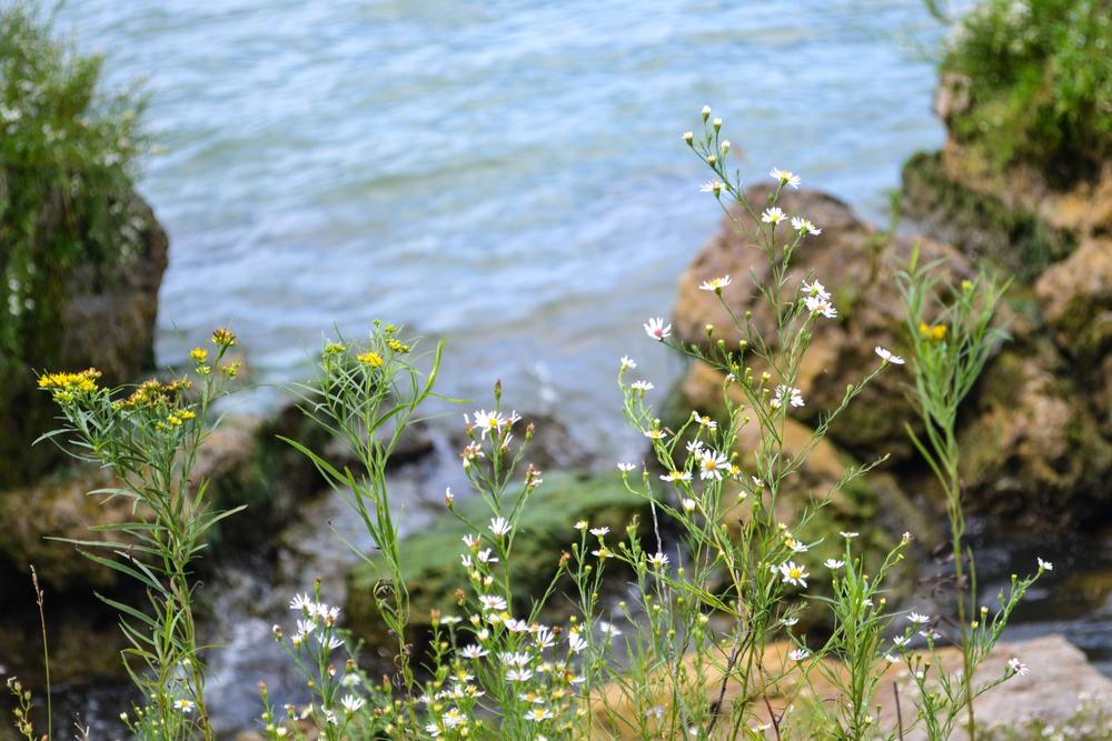 Kelleys Island nature