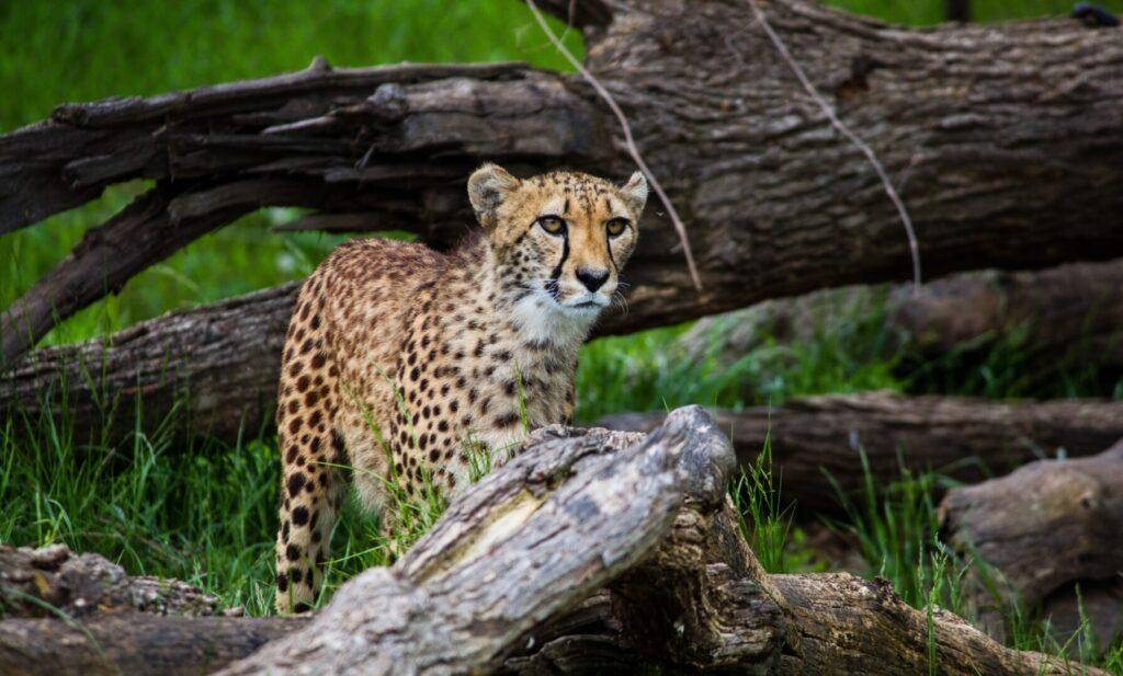 Henry Doorly Zoo