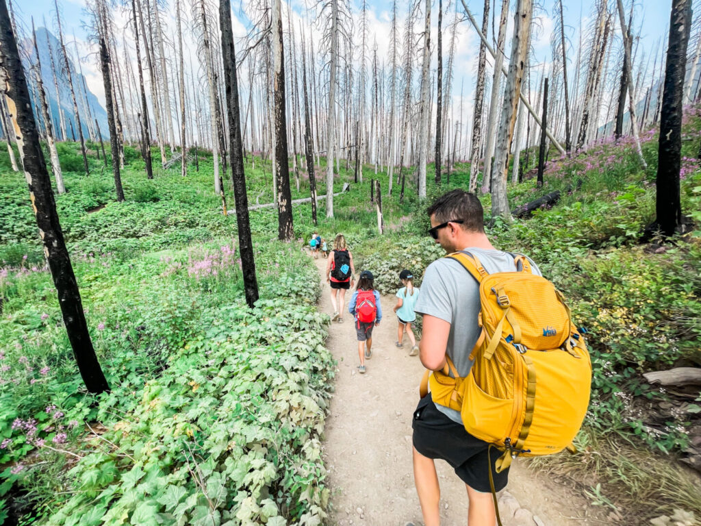 Family hikes through woods at Glacier National Park