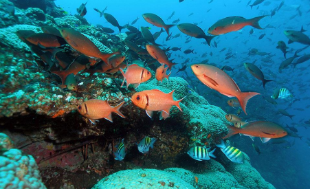 Tropical fish swimming near coral reefs