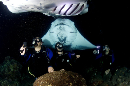 Scuba divers visited by large manna rays