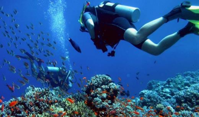 Scuba diver swims with fish among coral reef