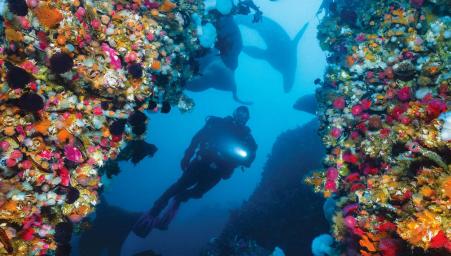 Scuba divers with ocean wildlife swimming overhead