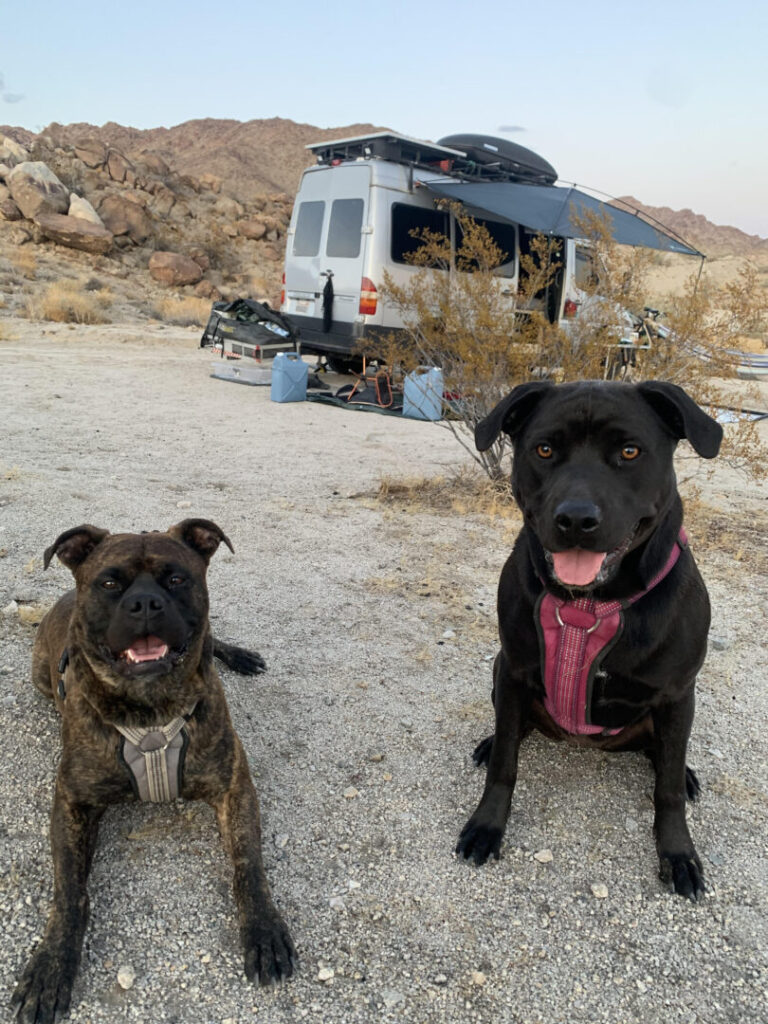 Two dogs sit outside their camper van