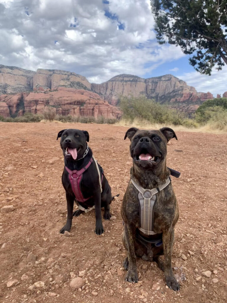 Two dogs pose near a red rock landscape