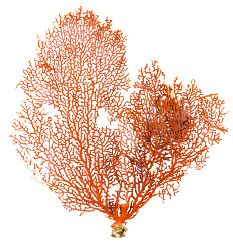 Cortina-Seaside-Style-Coral