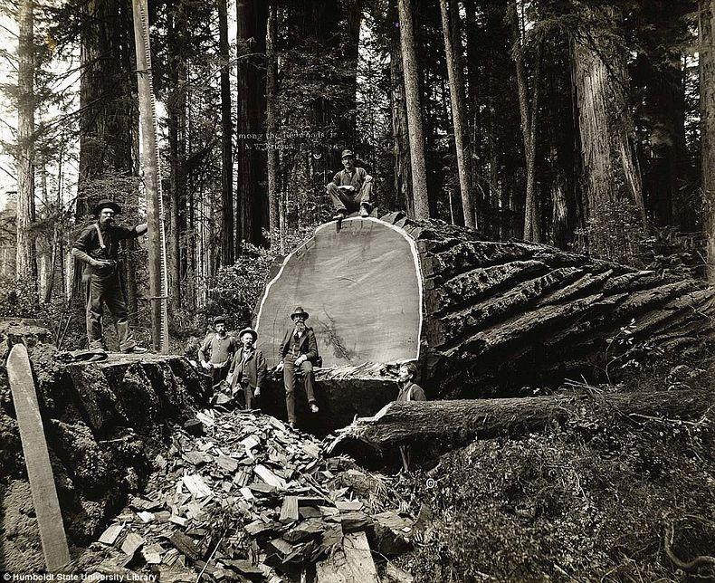 humboldt-state-university-19th-centure-lumberjacks-1