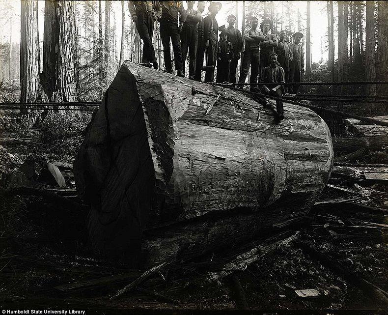 humboldt-state-university-19th-centure-lumberjacks-2