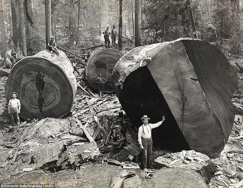 humboldt-state-university-19th-centure-lumberjacks-3