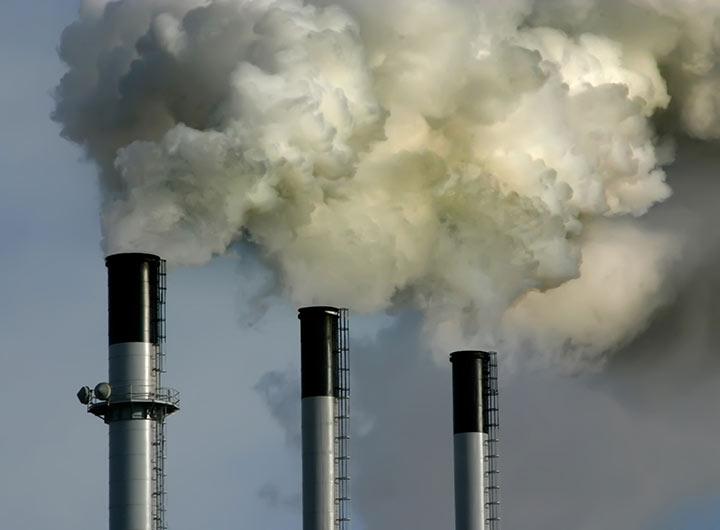 one-milion-trees-capture-carbon
