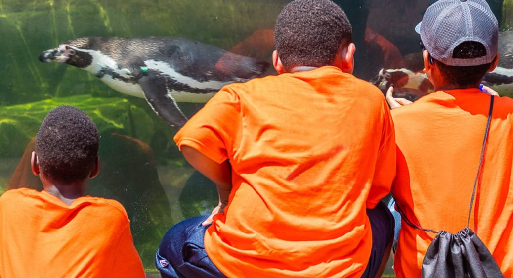 Kids wearing orange t-shirts at the zoo looking at swimming penguins through glass