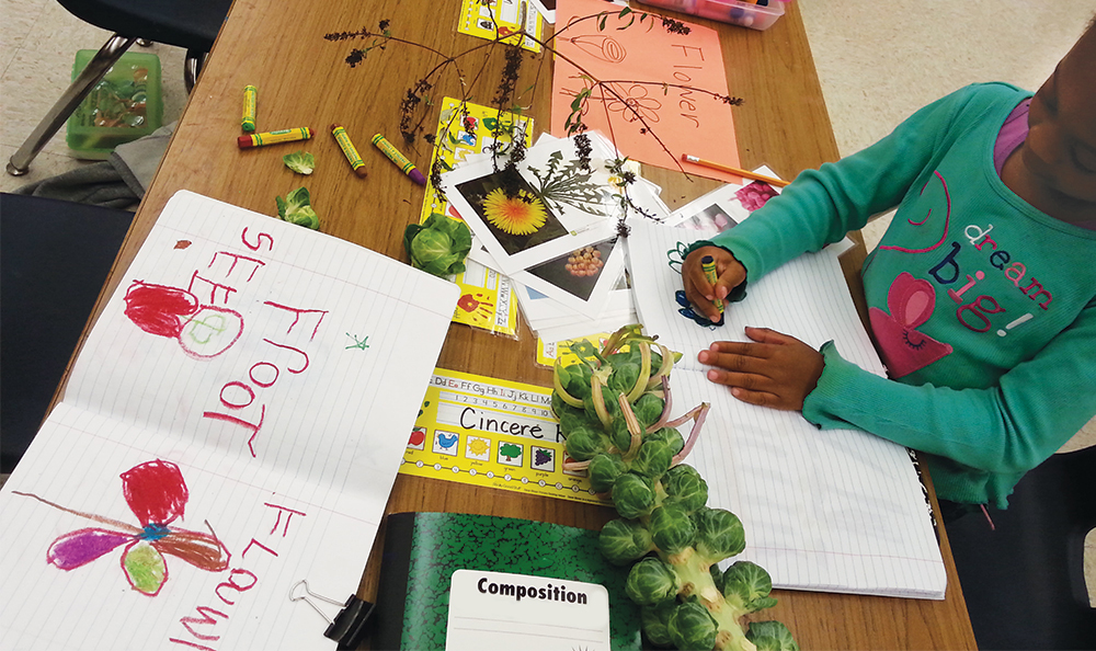 Kindergarten students use crayon to draw stalk of broccoli from real life.