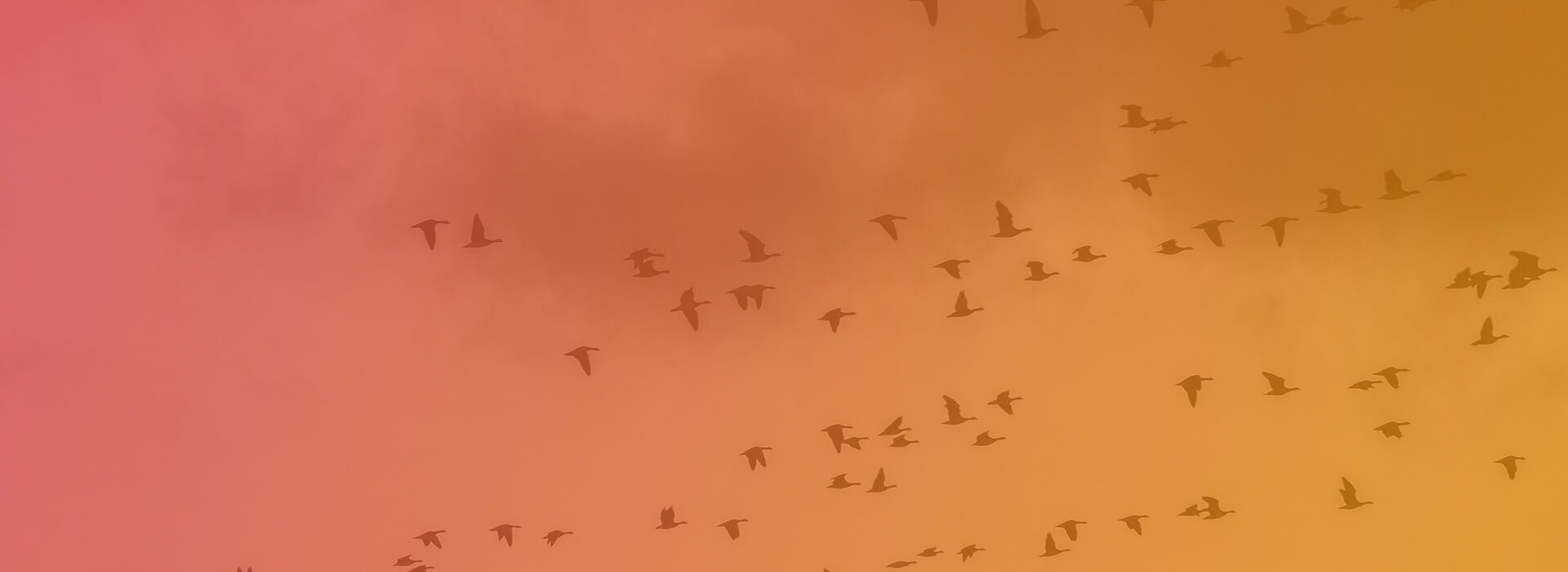 a large flock of birds flying across the sky