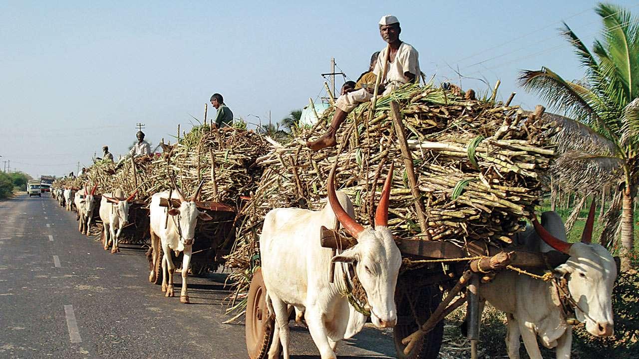 देशभर के किसानों को केंद्र सरकार की सौगात, गन्ने के न्यूनतम खरीद रेट में की गई बढ़ोतरी