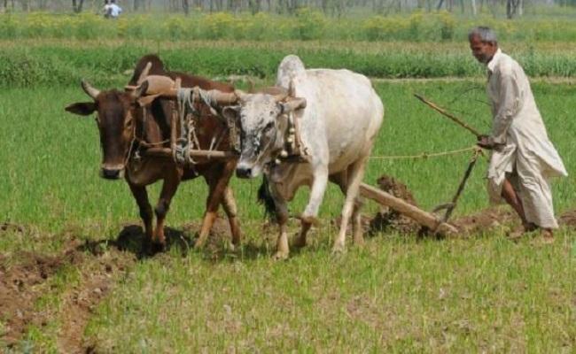 Kisan Diwas 2020: क्या आप किसानों के इन अधिकारों और सुविधाओं के बारे में जानते हैं?