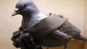 भारत-पाकिस्तान बॉर्डर पर कबूतर के जरिए जासूसी करवा रहा पड़ोसी देश! पंजे में बंधा मिला सीक्रेट कोड