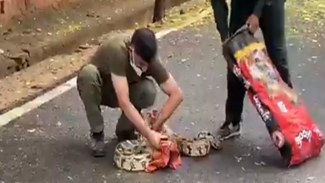 दिल्ली: आर्मी स्कूल के पास अजगर दिखने से मचा हड़कंप, सेना के ब्रिगेडियर ने दिखाई बहादुरी