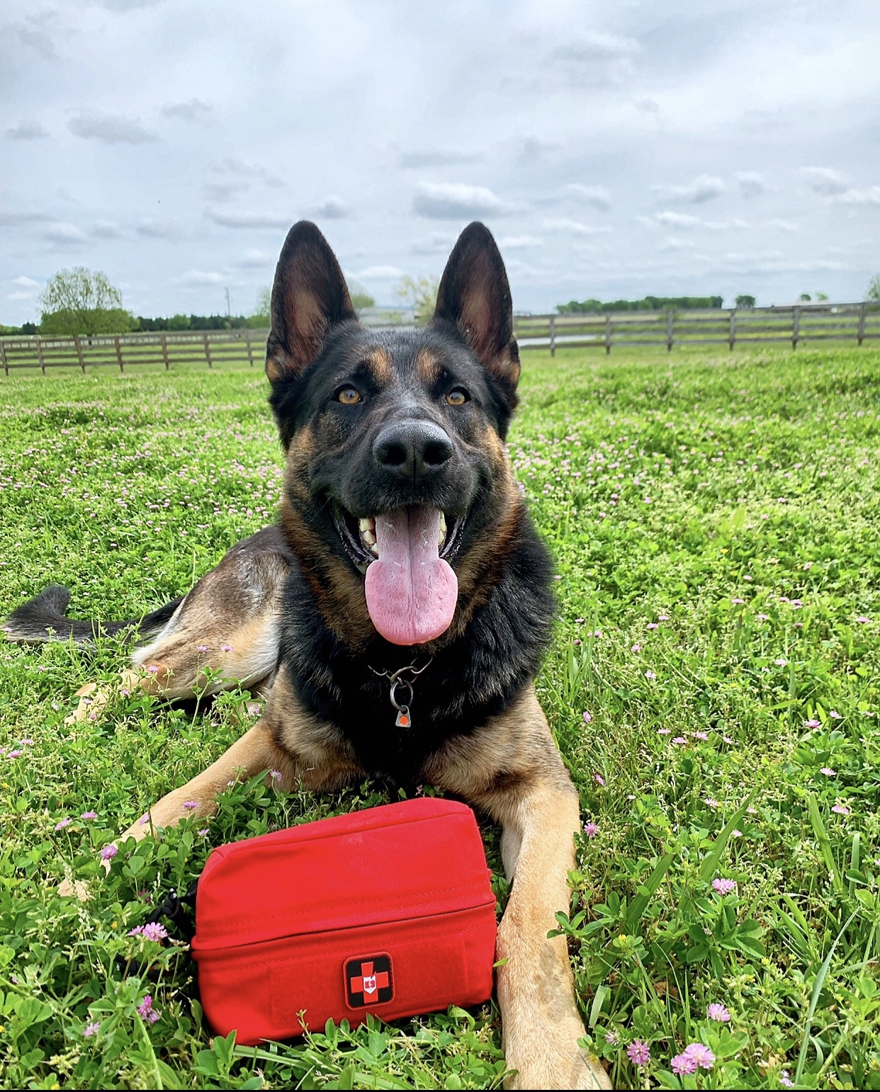 dog with trikos first aid kit