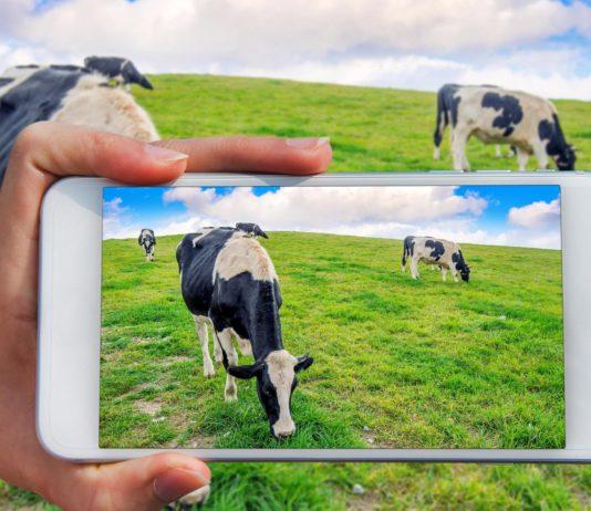 Scope Of Livestock Management Software