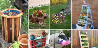 Simple and Unique DIY Tips and Tricks of Gardening