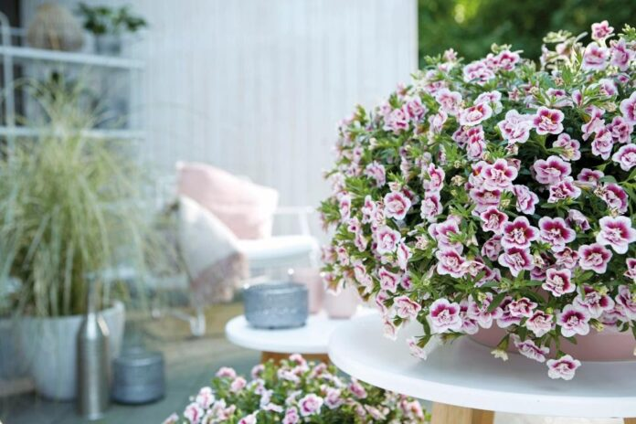 10 Flower Plants That You Love to Grow In Your Home