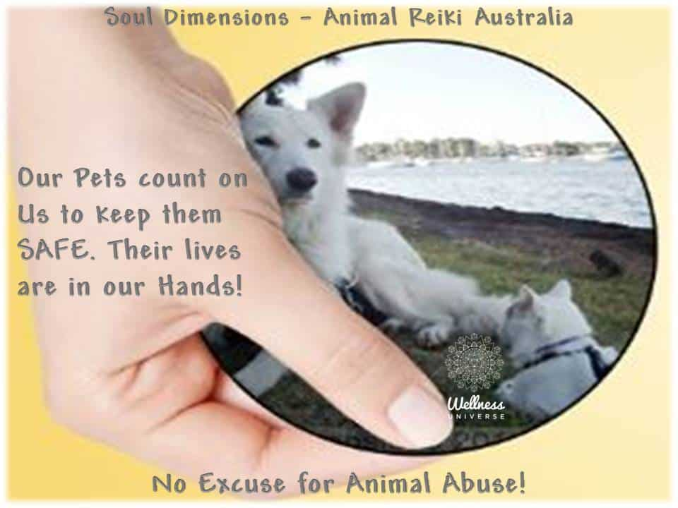 Our Pets count on us to keep them safe! W U POSTERS 1