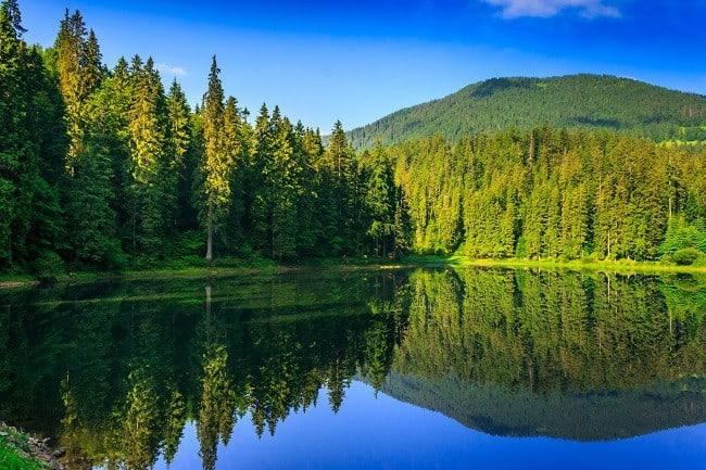 IMG_0258freshness near forest
