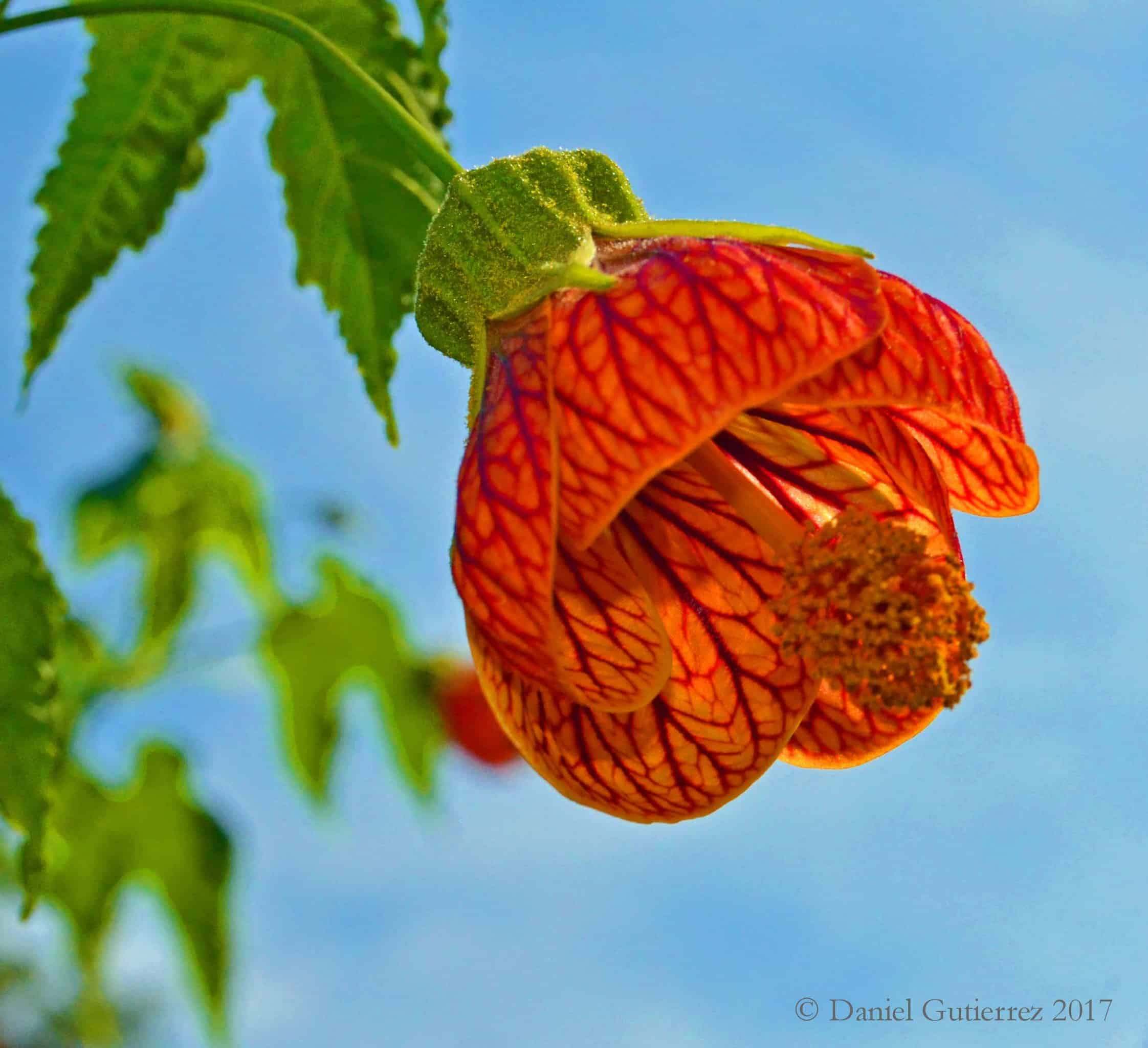 lovley flowers of peru the wellness universe