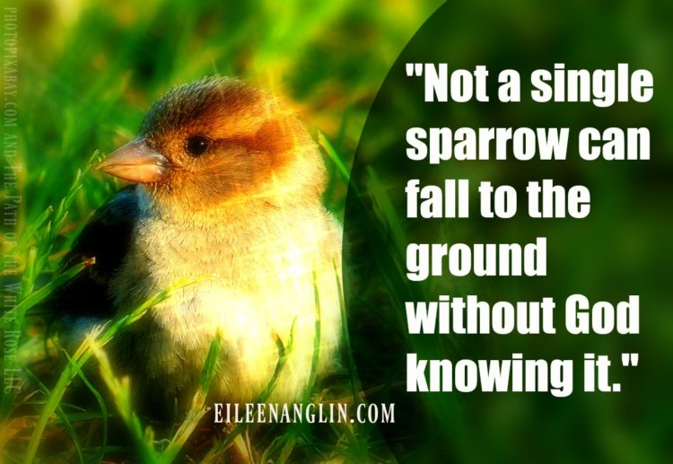 """Not a single sparrow can fall to the ground without God knowing it."" I had a tough day"