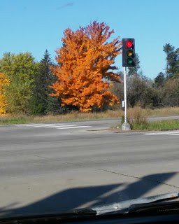 Our chemistry changes constantly. Sometimes drastically within one week as this fall tree did. What