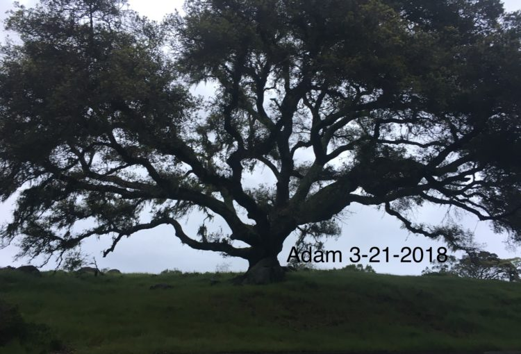 Trees are part of my family. Please meet 🌳Adam! fullsizeoutput_9f1f