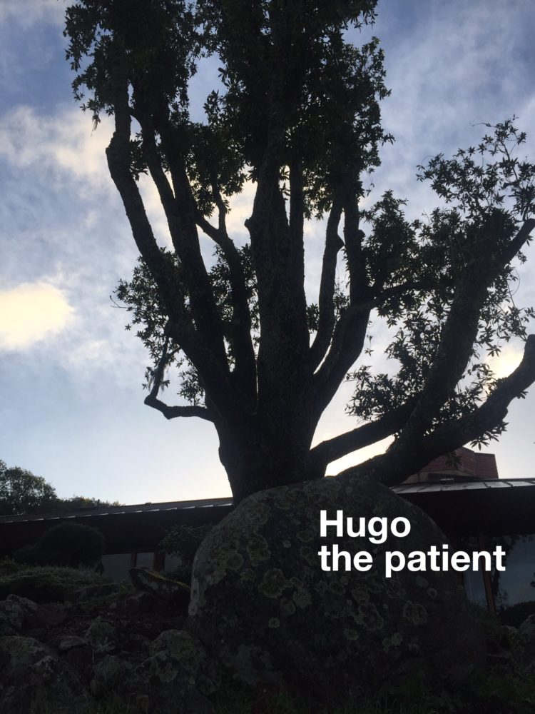 meet my Hugo the patient. Before we moved here 18months ago, Hugo was in full power spreadi