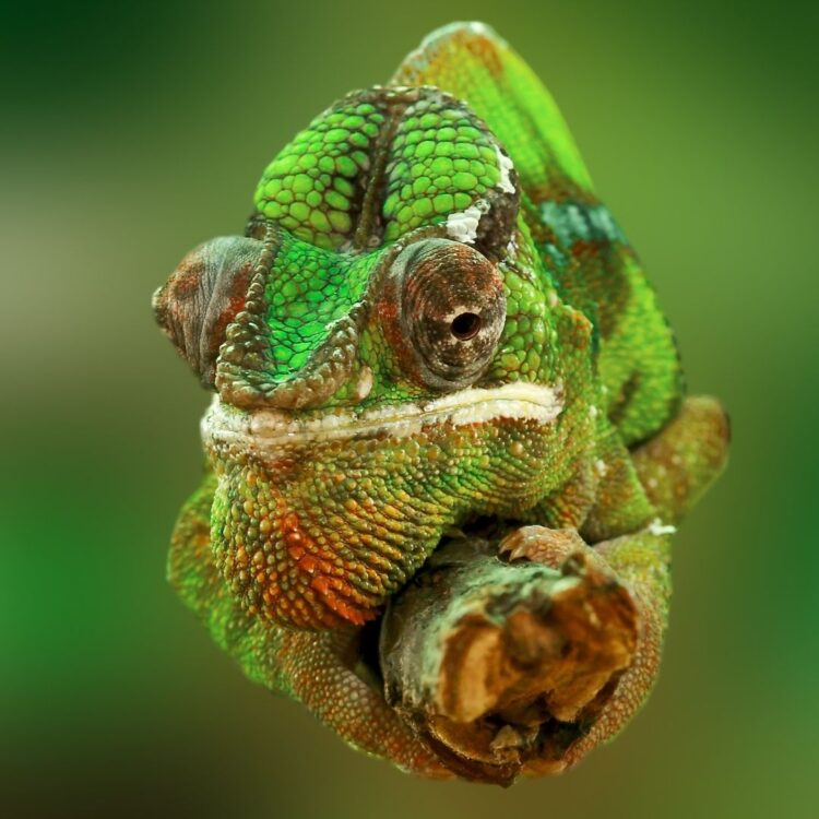 CONFESSIONS OF A RECOVERING CHAMELEON We all learn to people please on some level. I've learne