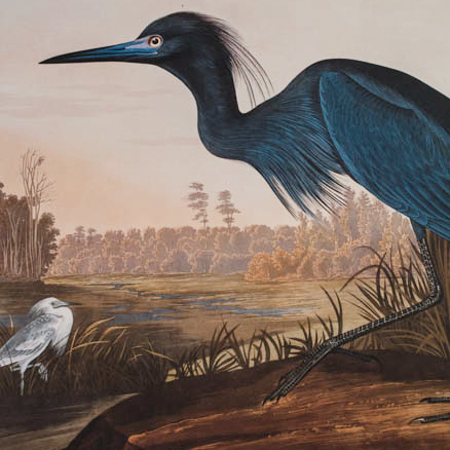Audubon Ariel Press