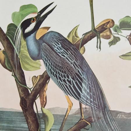 Audubon Amsterdam