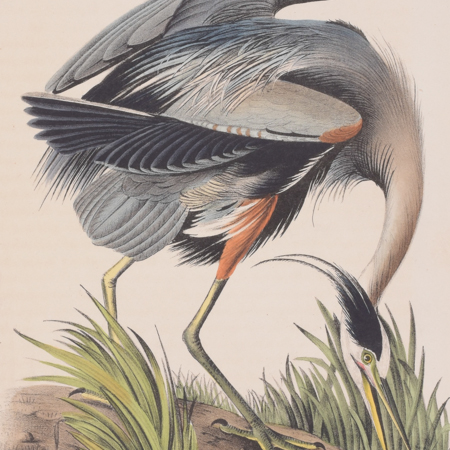 Audubon First Edition