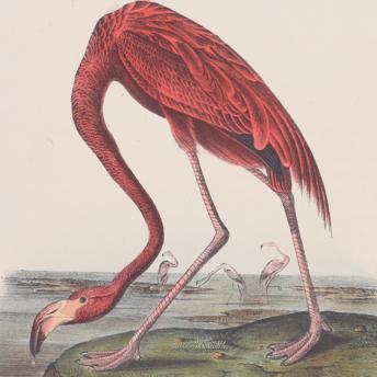 Audubon First Octavo