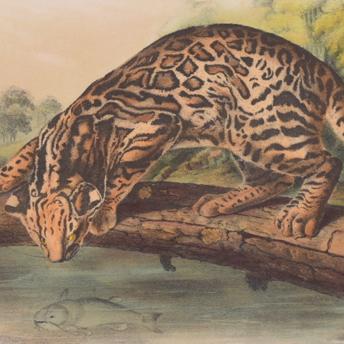 Audubon Octavo