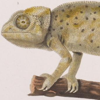 Cuvier - Regne Animal
