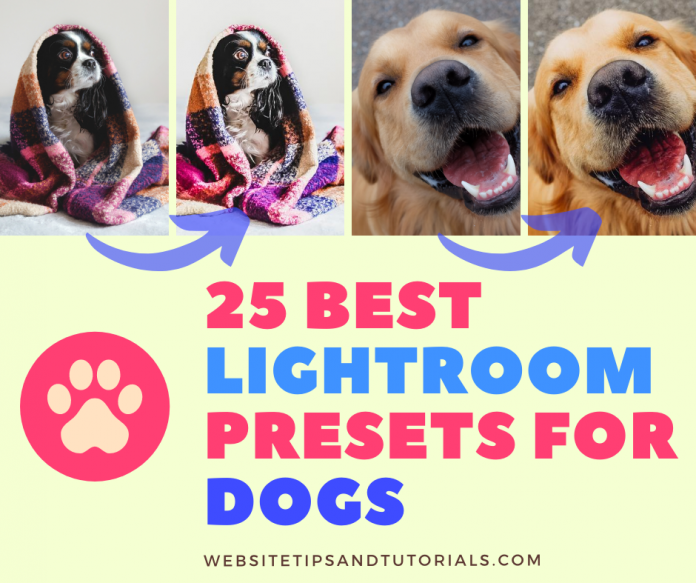 Best Lightroom Presets For Dogs Photography