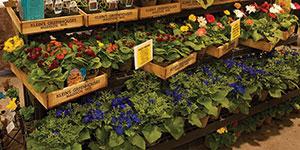 Garden Expo 2013